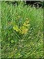 TF0820 : A juvenile Oak by Bob Harvey