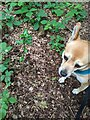 TF0820 : Tree, Dog by Bob Harvey