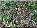 TF0820 : Maturing seedpods by Bob Harvey