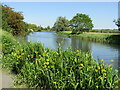 TL2572 : Huntingdon - River Great Ouse by Colin Smith