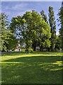 TF0820 : Trees by Bob Harvey