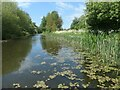 SJ3499 : Pipebridge, between bridges 5 and 4A by Christine Johnstone