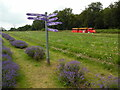 TQ2761 : Signpost and train at Mayfield Lavender Farm (1) by David Hillas