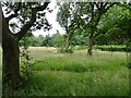 SJ8601 : Natural Burial Ground by Gordon Griffiths