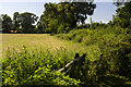 SJ2711 : Hedgerow and field by P Gaskell