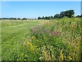TQ4677 : East Wickham Open Space by Marathon