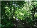 SO9194 : Park Path by Gordon Griffiths