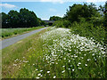 SK8971 : NCN Route 64 by Richard Croft