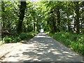 TG1838 : Northwest on Road through Plantations by David Pashley