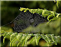 NT9658 : A spider's web at Lamberton by Walter Baxter