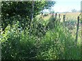 NY1772 : Overgrown path by the River Annan by Jim Barton