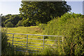 SJ2416 : Hedgerow and field by P Gaskell