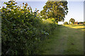 SJ2214 : Hedgerow and field by P Gaskell