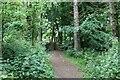 NO5705 : Innergellie Woodland walk by Bill Kasman