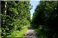 SE6142 : York and Selby Path in Moreby Far Wood by Chris Heaton