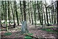 NY5331 : Roundthorn trig point in Lady's Plantation by Luke Shaw