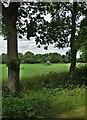 SK8470 : Field of turf near Wigsley Woods by Neil Theasby