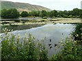 NS6278 : Whitefield Pond, Lennoxtown by Richard Sutcliffe