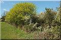 SX9269 : Springtime north of Maidencombe by Derek Harper