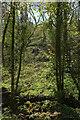 SX8863 : Wooded hillside, Hollicombe Lake valley by Derek Harper