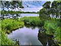 NX7661 : Carlingwark Loch by David Dixon