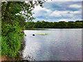 NX8171 : Auchenreoch Loch by David Dixon