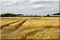 SK3617 : A field in the Money Hill region, Ashby-de-la-Zouch by Oliver Mills