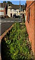SO8005 : Weeds at the edge of Verdun Court, Stonehouse by Jaggery