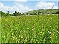 SD9771 : Meadow flowers near Kettlewell by Stephen Craven
