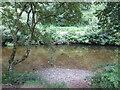 SX8063 : Dartington Estate - River Dart by Colin Smith