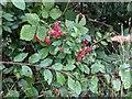 TF0820 : In a hedge bottom by Bob Harvey