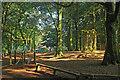 SX8151 : Woodlands Family Theme Park by Derek Harper