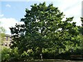 SE2734 : Armley Mills museum - workers memorial tree by Stephen Craven