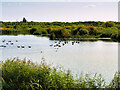 SD4213 : The Pat Wisniewski Reedbeds, Martin Mere Wetland Centre by David Dixon