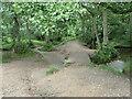 SJ9818 : 'Cross the footbridge over Sher Brook' by Christine Johnstone
