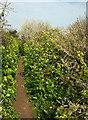 SX9065 : Path, Windmill Hill by Derek Harper