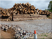 NR9381 : Log piles by the B8000 road by Thomas Nugent