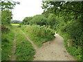 SZ0482 : South West Coast Path near Studland by Malc McDonald
