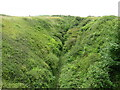 SY6973 : Ravine on the Isle of Portland by Malc McDonald