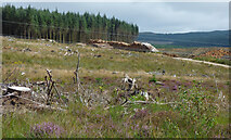 NR9380 : Deforestation by the B8000 road by Thomas Nugent