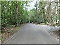 TG2628 : Skeyton Road through Woodland by David Pashley