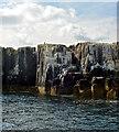 NU2337 : Staple Island, The Farne Islands by habiloid