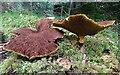 NJ3557 : Fungi by Anne Burgess