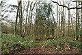 TQ5761 : Knockmill Wood by N Chadwick