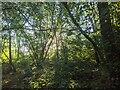 TF0820 : Glorious sunlight by Bob Harvey
