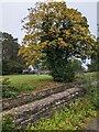 ST4793 : Early autumn colours in Shirenewton by Jaggery