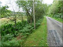 NS0177 : The B866 road at Loch Riddon by Thomas Nugent