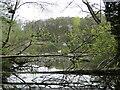TM3154 : Decoy pond at Loudham Watermill by Adrian S Pye