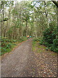 SK1705 : On the bridleway in Hopton Hays Wood by Richard Law