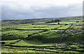 NY9043 : Fields below farm at Wolf Cleugh by Trevor Littlewood